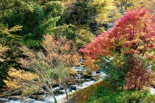 湯平温泉(大分県由布市)花合野川の紅葉の写真素材 [FYI04644672]