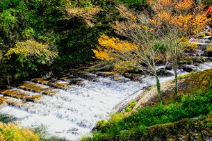 湯平温泉(大分県由布市)花合野川の紅葉の写真素材 [FYI04644673]