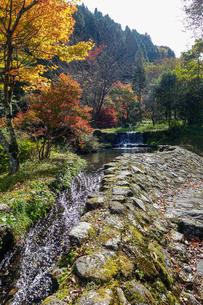 湯平温泉(大分県由布市)、花合野川の滝の紅葉の写真素材 [FYI04644674]