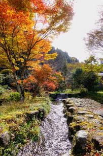 湯平温泉(大分県由布市)、花合野川の滝の紅葉の写真素材 [FYI04644675]