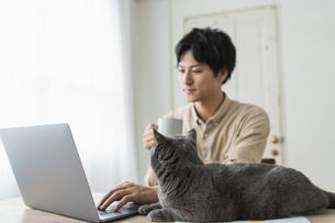 リモートワークをする男性と猫の写真素材 [FYI04644678]