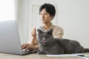 リモートワークをする男性と猫の写真素材 [FYI04644679]