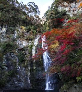 秋の箕面大滝の写真素材 [FYI04644713]