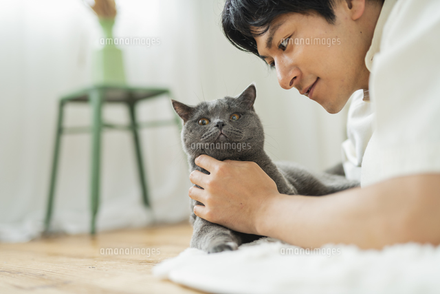 リモートワークをする男性と猫の写真素材 [FYI04644796]