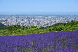 ラベンダー畑と札幌の街の写真素材 [FYI04644881]