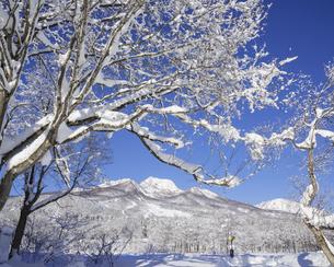雪と妙高山の写真素材 [FYI04644973]