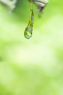 水滴 しずくの写真素材 [FYI04645044]