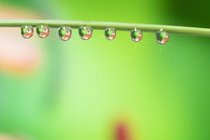 水滴 しずくの写真素材 [FYI04645056]