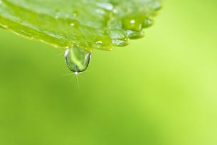 水滴 しずくの写真素材 [FYI04645066]
