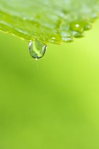 水滴 しずくの写真素材 [FYI04645067]