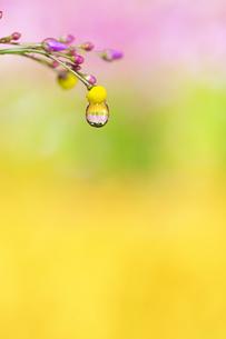 水滴 しずくの写真素材 [FYI04645078]