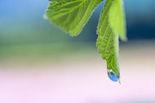 水滴 しずくの写真素材 [FYI04645081]