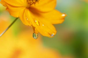 水滴 しずくの写真素材 [FYI04645088]