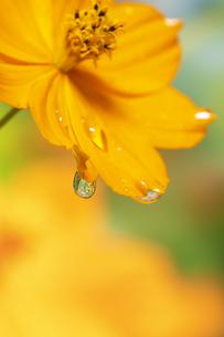 水滴 しずくの写真素材 [FYI04645089]