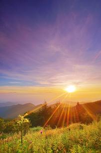 美ヶ原高原のウバユリと朝日と浅間山遠望の写真素材 [FYI04645251]