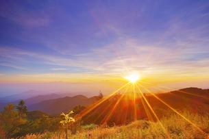 美ヶ原高原のウバユリと朝日と浅間山遠望の写真素材 [FYI04645252]
