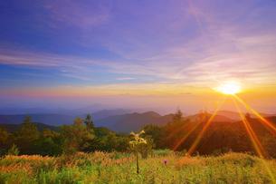 美ヶ原高原のウバユリと朝日と浅間山方向の山並みの写真素材 [FYI04645258]