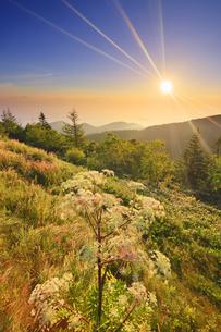 美ヶ原高原のシシウドと朝日と浅間山方向の山並みの写真素材 [FYI04645285]