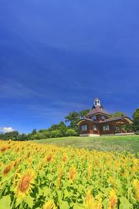 菜の花公園のヒマワリ畑と寄楽舎の写真素材 [FYI04645293]