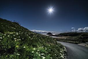 月夜の水仙 爪木崎公園の写真素材 [FYI04645379]