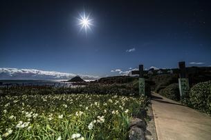 月夜の水仙 爪木崎公園の写真素材 [FYI04645380]