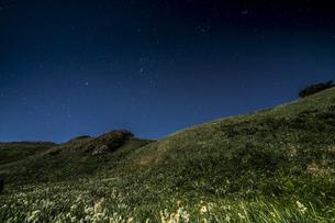 月夜の水仙 爪木崎公園の写真素材 [FYI04645382]