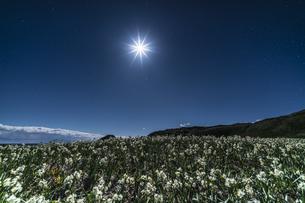 月夜の水仙 爪木崎公園の写真素材 [FYI04645388]