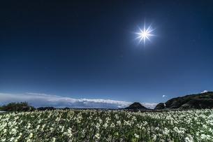 月夜の水仙 爪木崎公園の写真素材 [FYI04645389]