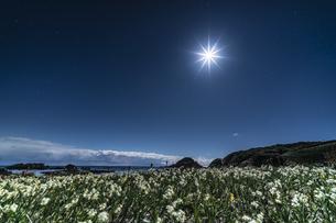 月夜の水仙 爪木崎公園の写真素材 [FYI04645390]