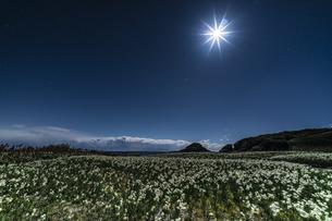 月夜の水仙 爪木崎公園の写真素材 [FYI04645394]