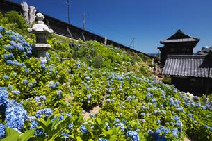 小樽貴賓館とアジサイ園の写真素材 [FYI04645573]