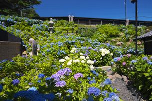 小樽貴賓館とアジサイ園の写真素材 [FYI04645576]