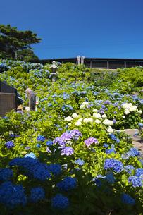小樽貴賓館とアジサイ園の写真素材 [FYI04645578]