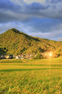 八木沢の田園と女神岳と朝日の反射の写真素材 [FYI04645602]