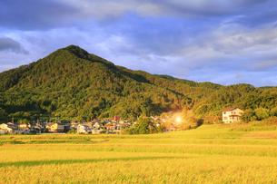 八木沢の田園と女神岳と朝日の反射の写真素材 [FYI04645604]