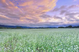 前山の蕎麦畑と朝日と朝焼けの写真素材 [FYI04645609]