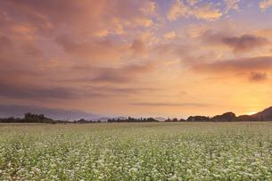 前山の蕎麦畑と朝日の写真素材 [FYI04645614]