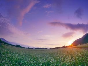 前山の蕎麦畑と朝日の写真素材 [FYI04645624]