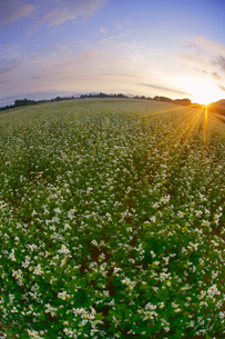 前山の蕎麦畑と朝日の写真素材 [FYI04645634]