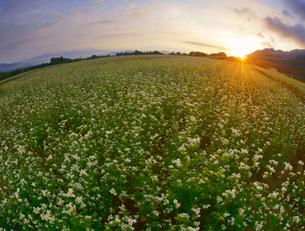 前山の蕎麦畑と朝日の写真素材 [FYI04645639]