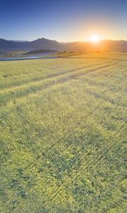 東山観光農園の蕎麦畑と夕日と独鈷山と美ヶ原遠望の写真素材 [FYI04645649]