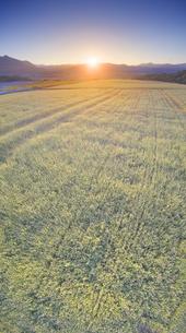 東山観光農園の蕎麦畑と青木三山などの里山と夕日の写真素材 [FYI04645650]
