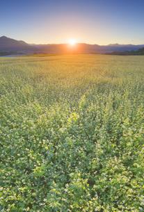 東山観光農園の蕎麦畑と青木三山などの里山と夕日の写真素材 [FYI04645655]