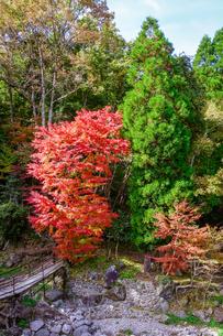 阿蘇野川(由布市)、白水鉱泉付近の紅葉の写真素材 [FYI04645666]