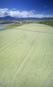 東山観光農園の蕎麦畑と独鈷山などの里山の写真素材 [FYI04645669]