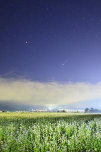 東山観光農園の蕎麦畑のライトアップと流星の写真素材 [FYI04645676]