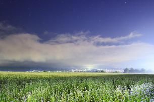 東山観光農園の蕎麦畑のライトアップの写真素材 [FYI04645679]