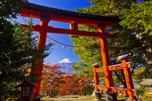 新倉富士浅間神社の鳥居と富士山の写真素材 [FYI04646103]