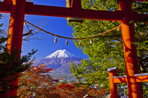 新倉富士浅間神社の鳥居と富士山の写真素材 [FYI04646107]