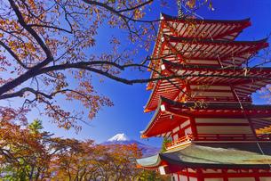 秋の新倉富士浅間神社の五重塔と富士山の写真素材 [FYI04646118]